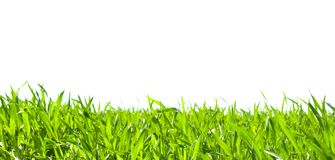 Grass on white. Green grass on white background Stock Image