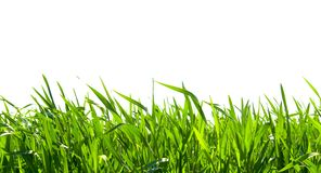 Grass on white. Isolated green grass on white background Royalty Free Stock Photos