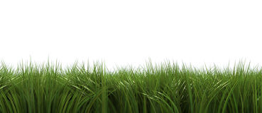Grass on white Royalty Free Stock Images