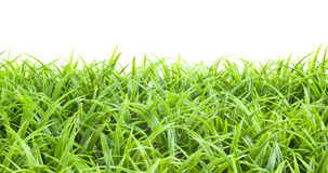 Grass on white. Freshly looking green grassy patch (artificial) isolated on white Royalty Free Stock Photo