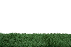 Grass and white background Royalty Free Stock Photography