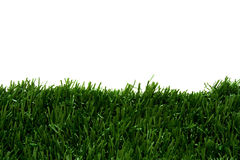 Grass and white background Royalty Free Stock Photo