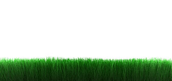 Grass on white background Royalty Free Stock Photos