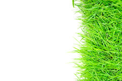 Grass and white background Stock Image