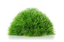 Grass on a white background Stock Photos