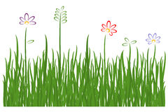 Grass on white background. Stock Photography