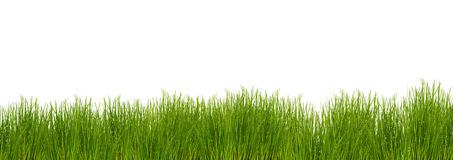 Grass on white background. Green grass on white background Stock Photos