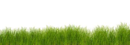 Grass on white background Stock Photos