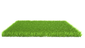 Grass on white background. Green grass on white background Stock Photo