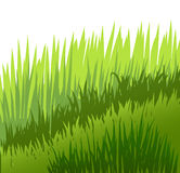 Grass on white background. Green grass on white background, lawn, vector Royalty Free Stock Photo