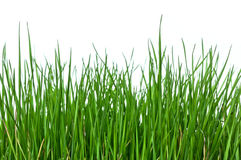 Grass on white background horizontal Royalty Free Stock Image