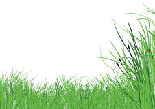 Grass on white background Royalty Free Stock Photography