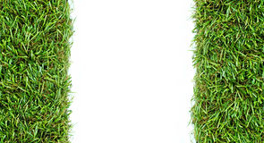 Grass on a white background. For text and message design Stock Photography