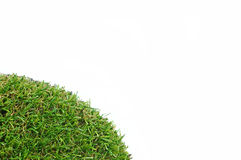Grass on a white background. For text and message design Royalty Free Stock Photography