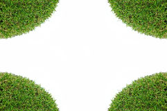 Grass on a white background. For text and message design Stock Photo