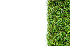 Grass on a white background. For text and message design Royalty Free Stock Image