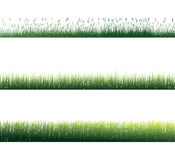 Grass. On white background. Vector Royalty Free Stock Photo