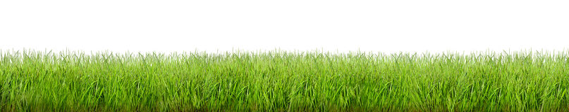 Grass on white background. Wide panorama of green grass on white background Royalty Free Stock Photography