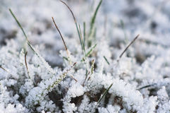 Grass in white cristals. The grass was frozen. Cristal Stock Image