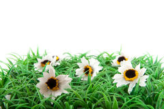 Grass with white flowers Royalty Free Stock Photos