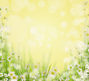 Grass with white flowers , blurred nature background, Stock Photography