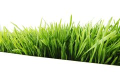 Grass on white Stock Images