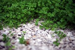 Grass and white stone background. Grass and white garden gravel closeup background royalty free stock photography