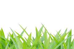 Grass on white isolated Royalty Free Stock Images