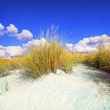 Grass on a white sand dunes beach and blue sky Stock Photography