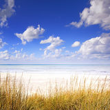 Grass on a white sand dunes beach, ocean and blue sky. On background Royalty Free Stock Photography