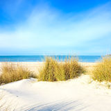 Grass on a white sand dunes beach, ocean and sky. Grass on a white sand dunes beach, blue ocean and sky on background Stock Image