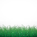Grass on a white shining background with flowers. Eps10 Royalty Free Stock Photos