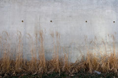Grass and White Wall Royalty Free Stock Photo