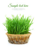 Grass in wicker basket Stock Photo