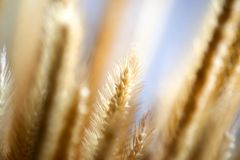 Grass wild flower in garden under sunlight,abstract natural back royalty free stock photos