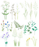 Grass and wild flowers. Collection of herbs and wild flowers on white background Royalty Free Stock Images