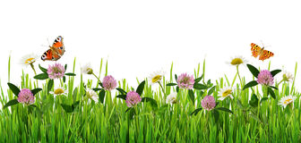 Grass and wild flowers border with butterflies. On white background royalty free stock images