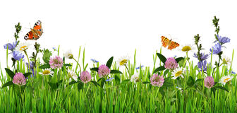 Grass and wild flowers border with butterflies. On white background stock photography