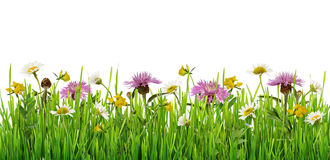 Grass and wild flowers border. On white background royalty free stock images