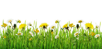 Grass and wild flowers border. On white background stock image