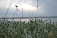 Grass with wild flowers grows against the background of the estuary in cloudy weather, beautiful Ukrainian landscape stock images
