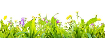 Grass and wild flowers isolated background. A grass and wild flowers isolated background. Isolation as additional in png format royalty free stock photos