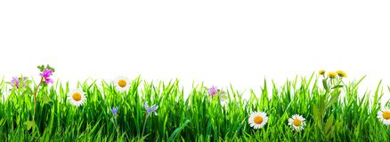 Grass and wild flowers isolated. Background. Isolation as additional in png format royalty free stock image