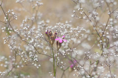 Grass and wildflowers, sunny summer meadow Stock Image