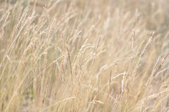 Grass and wildflowers, sunny summer meadow Royalty Free Stock Photos