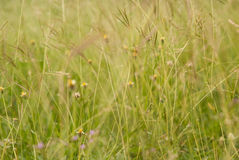 Grass and wildflowers wallpaper. Long green grasses and wildflowers in field Stock Photo