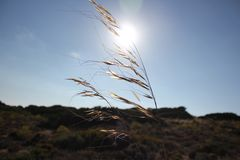Grass in the wind Stock Photography
