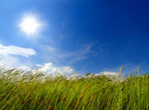 Grass and wind blowing Royalty Free Stock Image