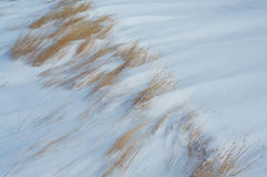 Grass in the wind blown snow Stock Photos