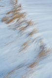 Grass in the wind blown snow Royalty Free Stock Images